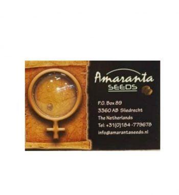 AMARANTA SEEDS CRITICAL (1PC) (FEM)  AMARANTA SEEDS CRITICAL (5PC) (FEM) zadn1 350x380